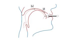 Физиология звучания И, Ы